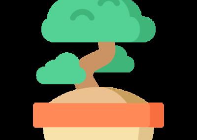 Bonsai ceuta