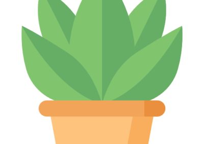 plantas ceuta floristeria lara ceuta